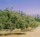 Wild Fruits Orchard